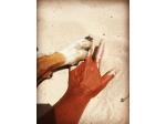 Ningaloo Reef Holiday Homes - Pet Friendly Accommodation - Exmouth, WA