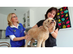 The Roaming Vet - Mobile Vet - Eastern Suburbs, Sydney, NSW