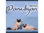 Damukyan Cattery - Birman Breeder - Sydney, NSW