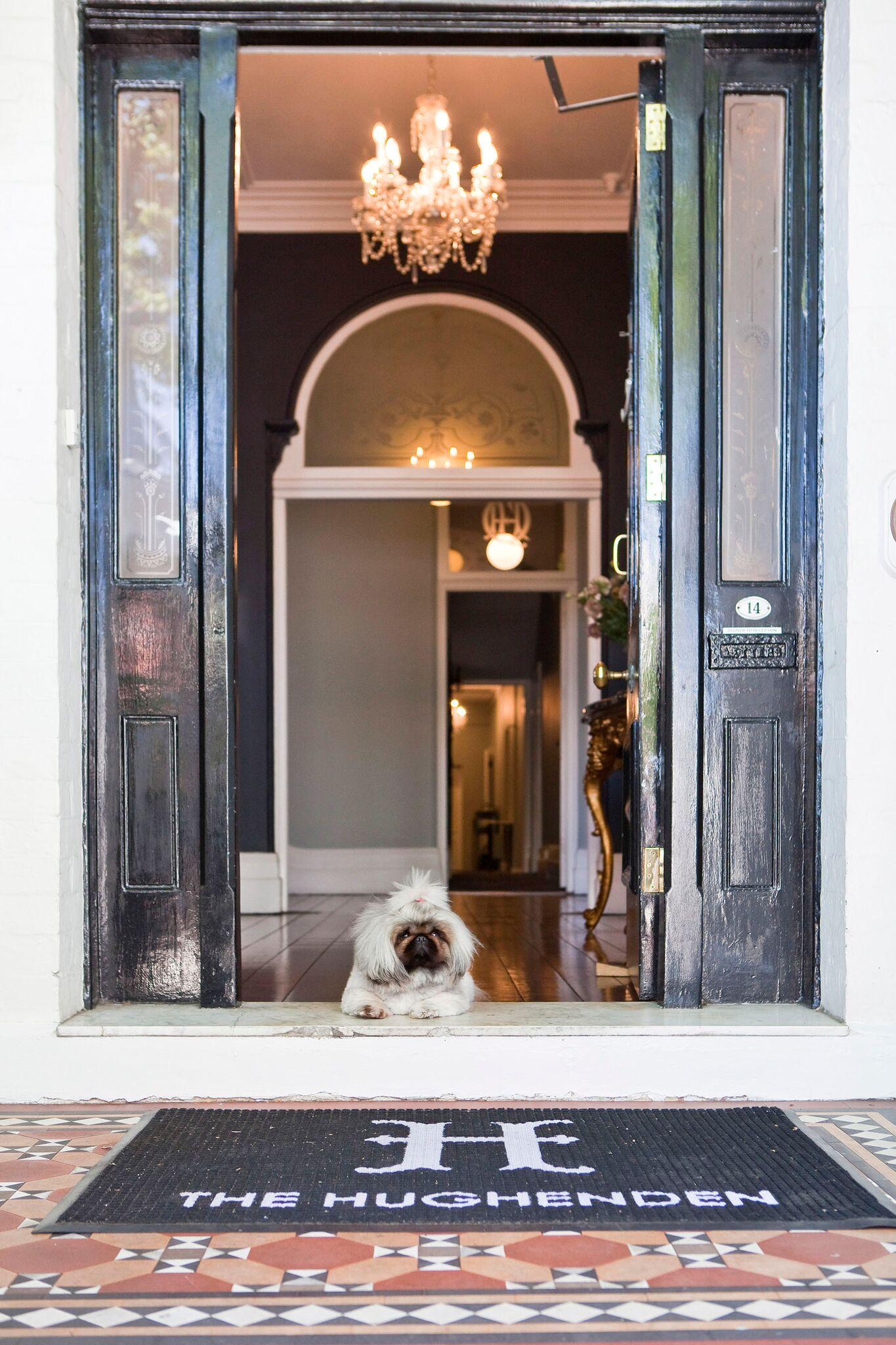 Sydney's Premier Pet Friendly Hotel gallery image