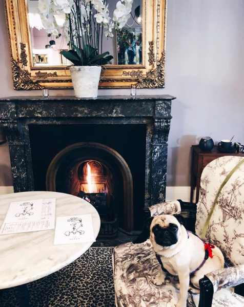Lounge - all dogs welcome gallery image