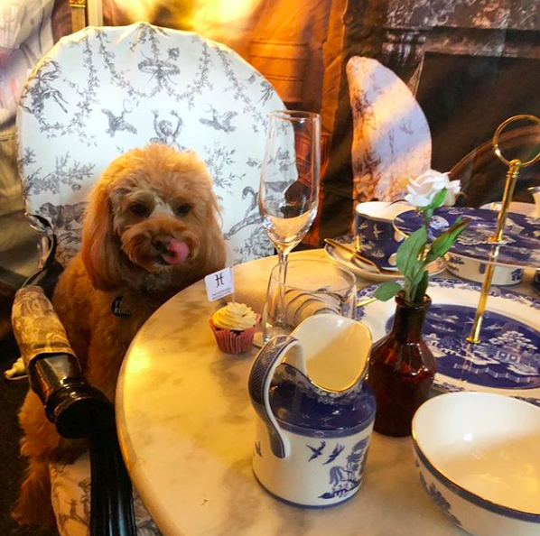 High Tea for Dogs gallery image