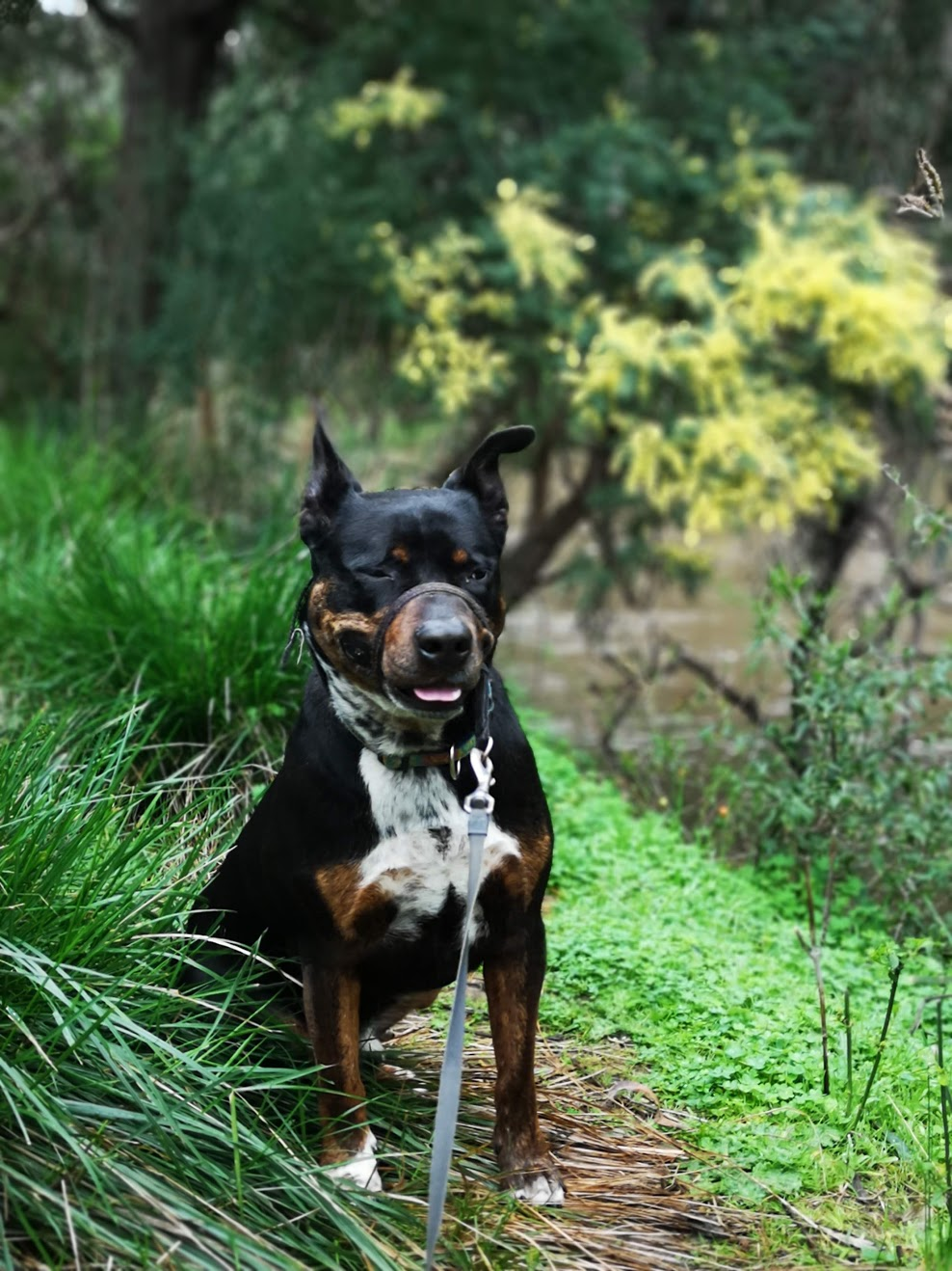 Our Private Doggy Adventure exploring the bushland gallery image