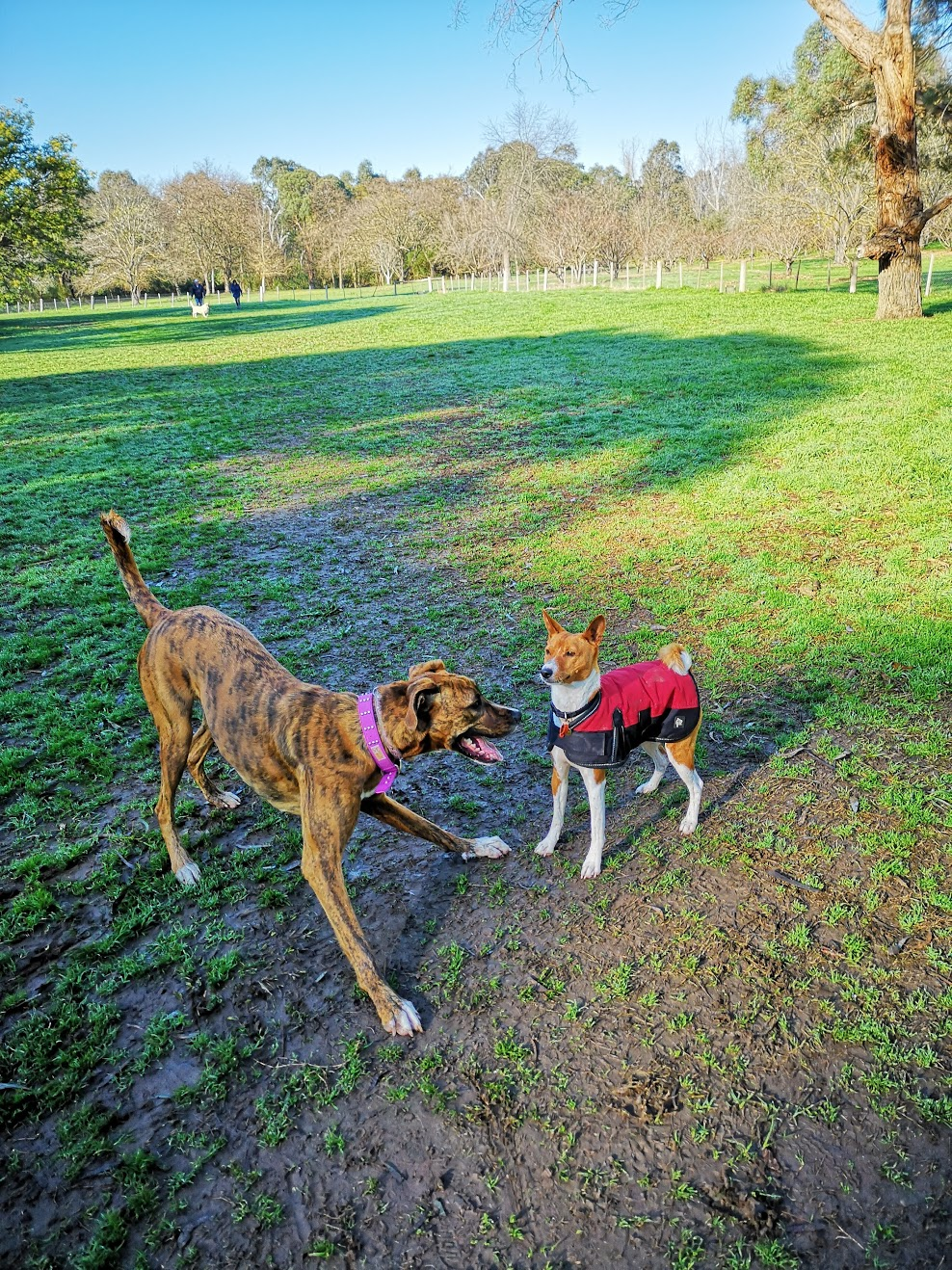 Our dog meets new friends at park. gallery image