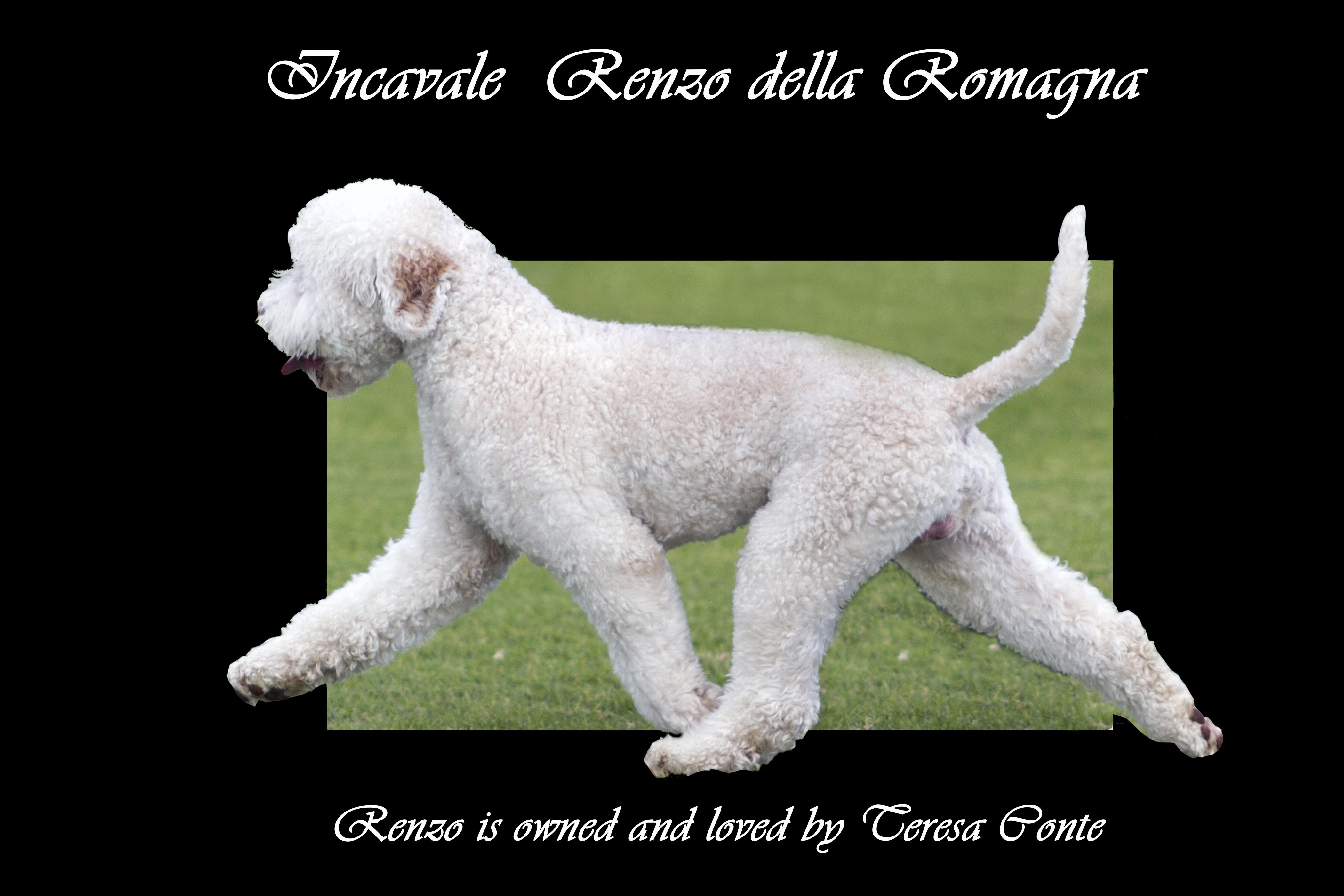 Aust CH Incavale Renzo della Romagna
