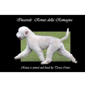 Puppies for sale from registered Dog Breeders in Adelaide