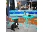 Gallery & Grind Cafe - Dog Friendly - Newcastle, NSW