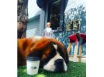 BOO Espresso - Dog Friendly Cafe - Northbridge - Perth, WA