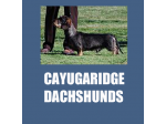 Cayugaridge Dachshunds - Wire-Haired Dachshund Breeder & Appaloosa Breeder - Coolamon, NSW