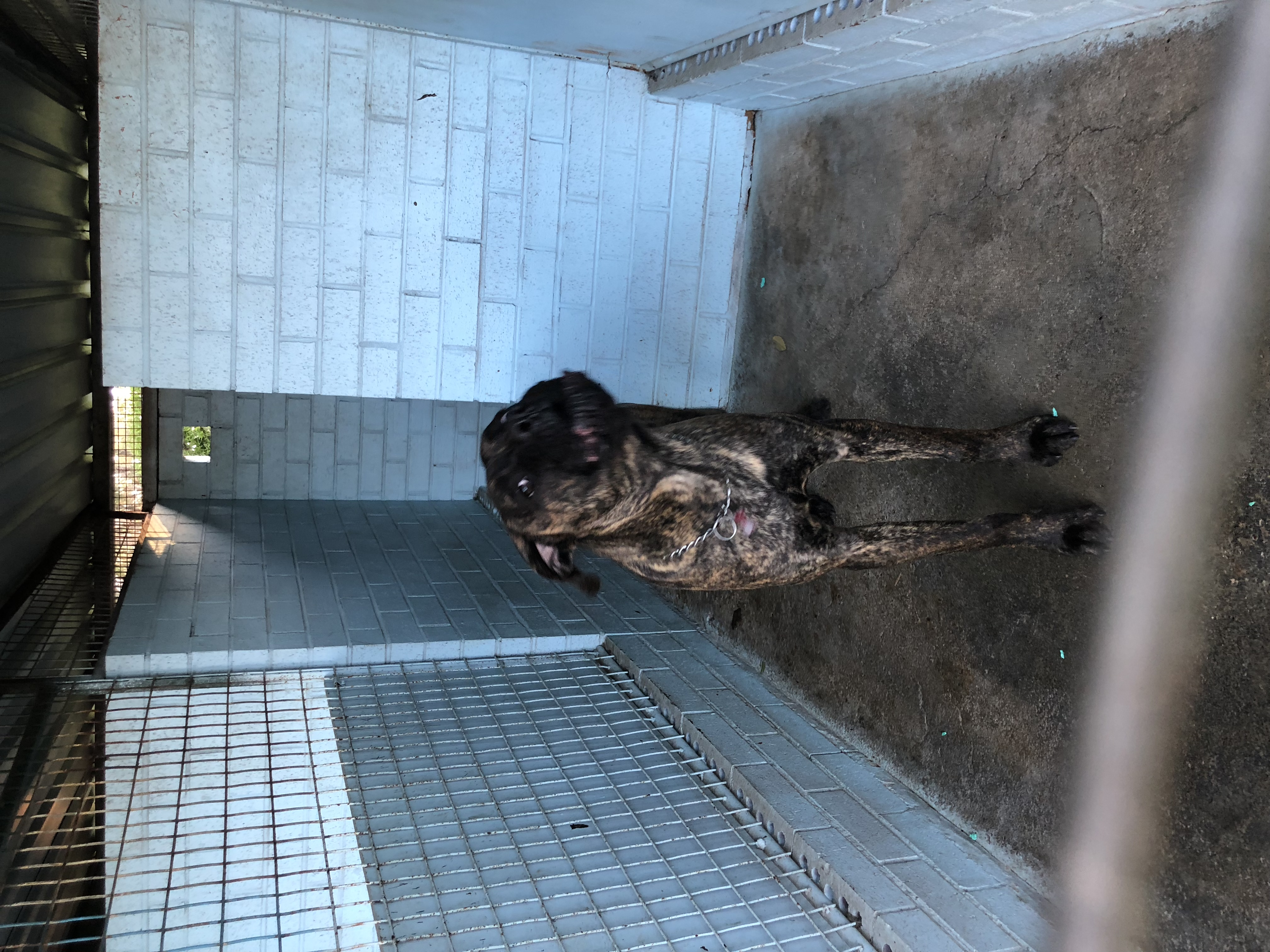 Spacious kennels gallery image