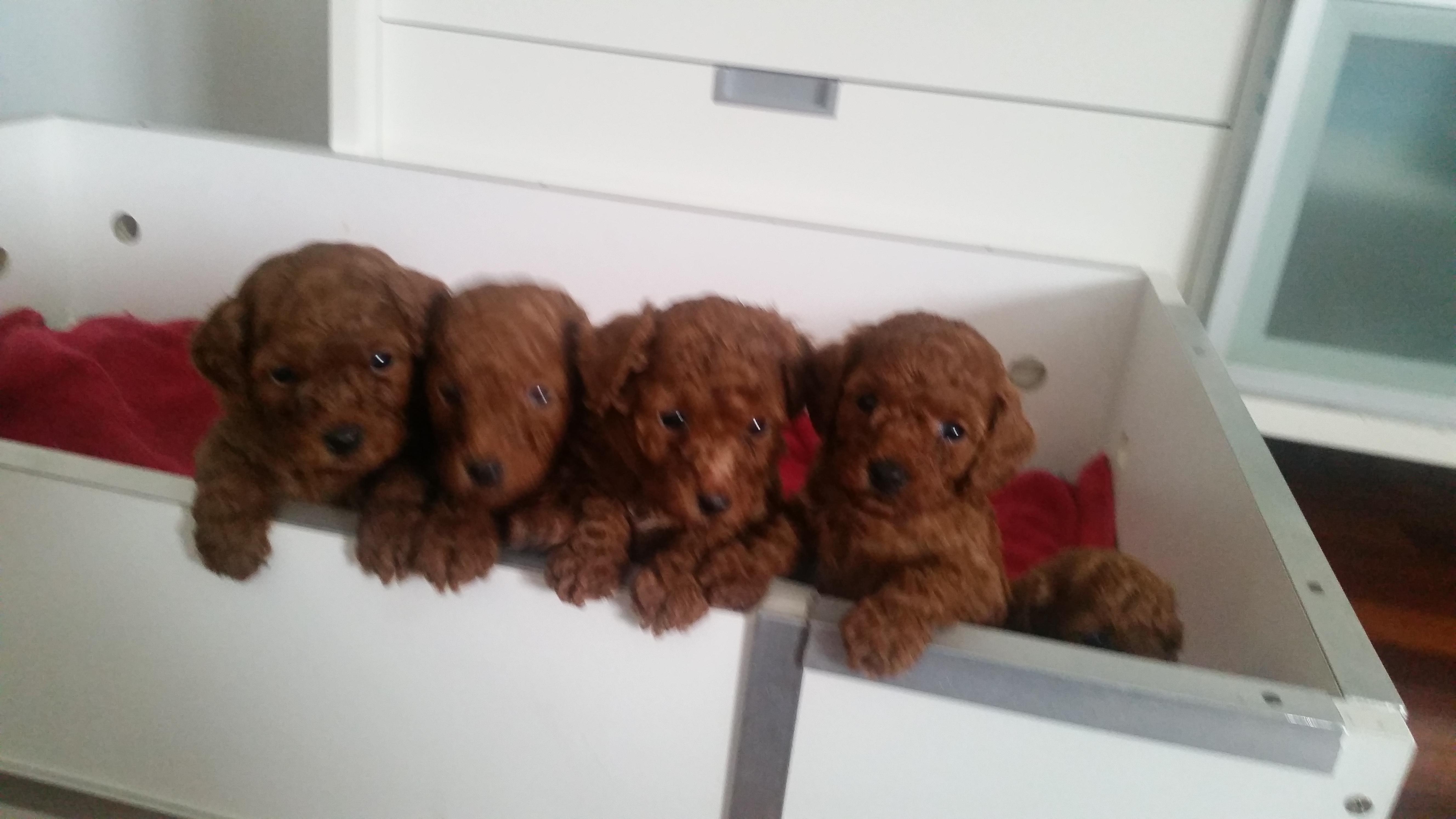 JONJUL puppies gallery image