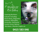Forest Cat Sitting - Pet Sitting & Minding - Northern Suburbs, Sydney