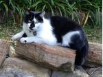 Cat Concierge Cat Sitting - sydney