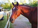 Healing Hooves - Rescue & interactive sessions for all ages & abilities - Gold Coast, Qld