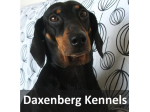 Daxenberg Kennels - Smooth-Haired Dachschund Breeder - Victor Harbor, SA