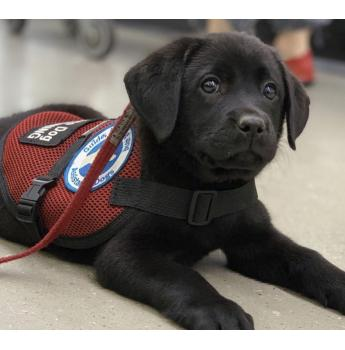 Smart Pups Assistance Dogs for Special Needs Children Inc.