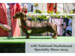 Cottesloe Smooth Dachshunds - Dachshund Breeder, VIC