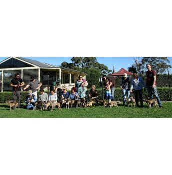 Tahrae Kennels - Italian Greyhound Breeder - Ballarat, VIC