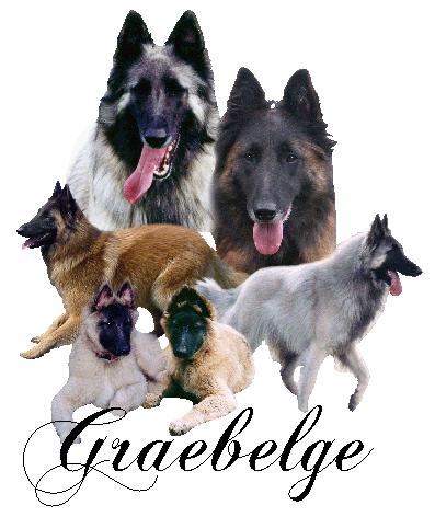 Graebelge Belgian Shepherds