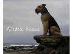 The Airedale Terrier Rescue and Adoption Network of Australia Inc