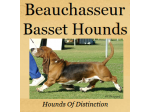 Beauchasseur Kennels & Basset Hound Breeder - South Australia