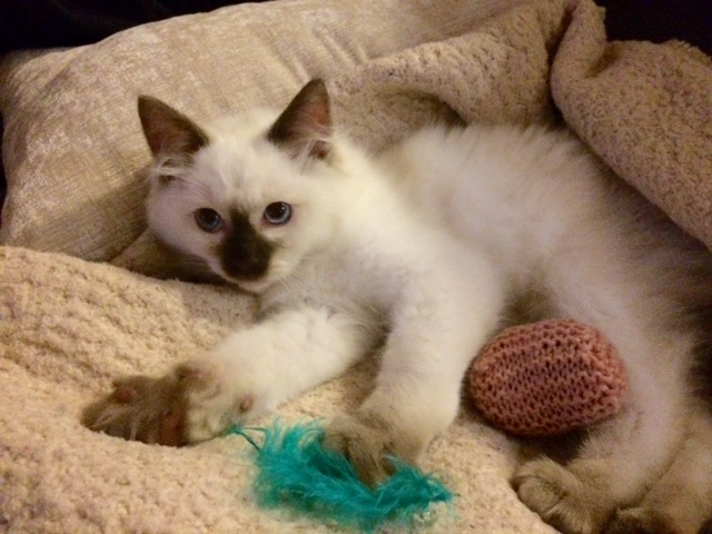 Price Paddy as a kitten gallery image