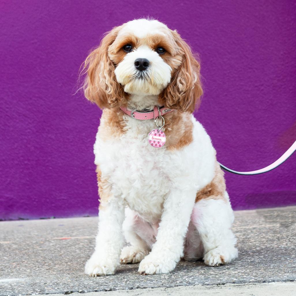 Dog Collar & Dog Tag gallery image