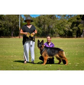 Registered German Shepherd Dog Breeders in Western Australia, WA