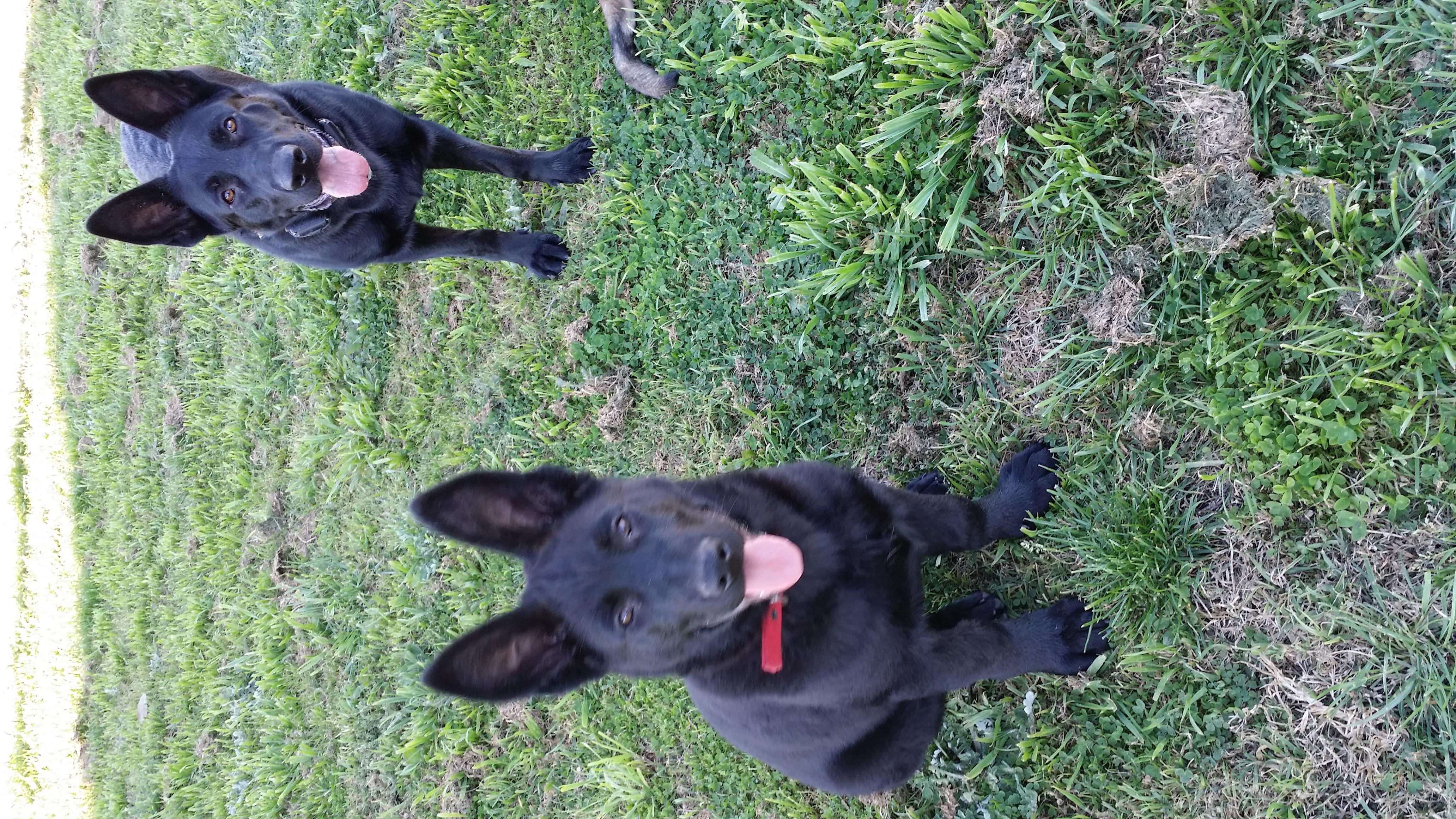 VonBIOS puppies gallery image