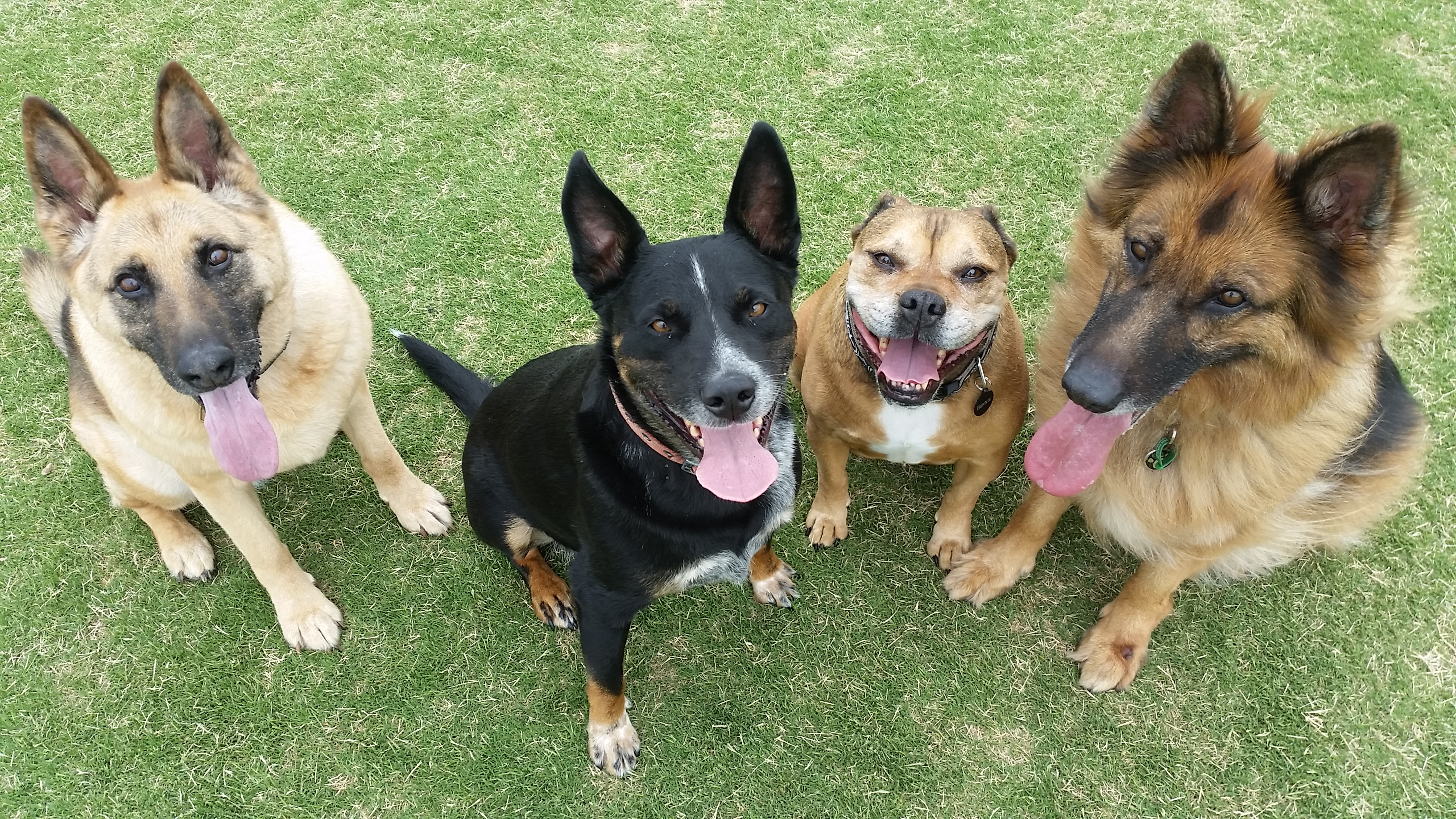 Cost Of Dog Grooming Melbourne