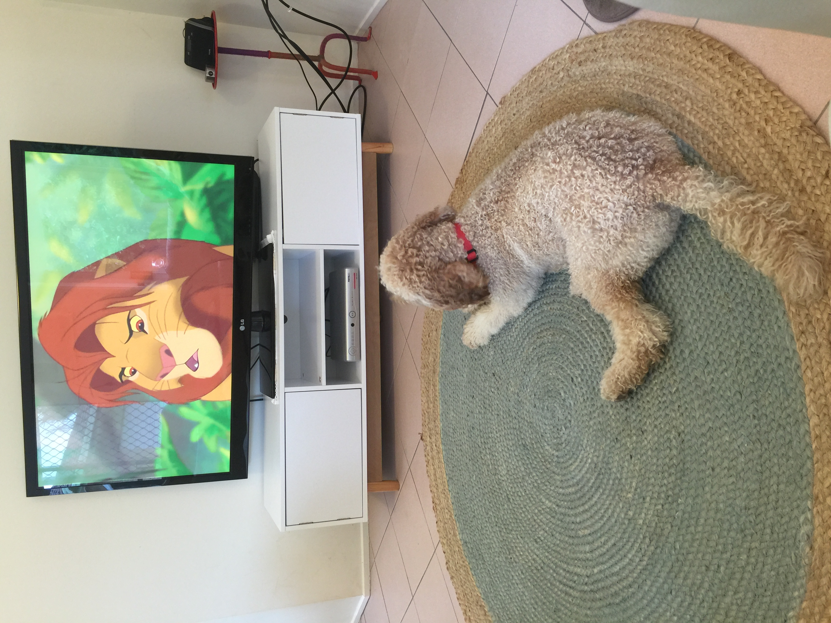 Leo loves watching The Lion King! gallery image