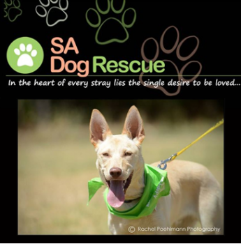Rescue Dogs For Adoption Adelaide