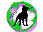MajestikMix Staffordshire Bull Terriers - South Gippsland, VIC
