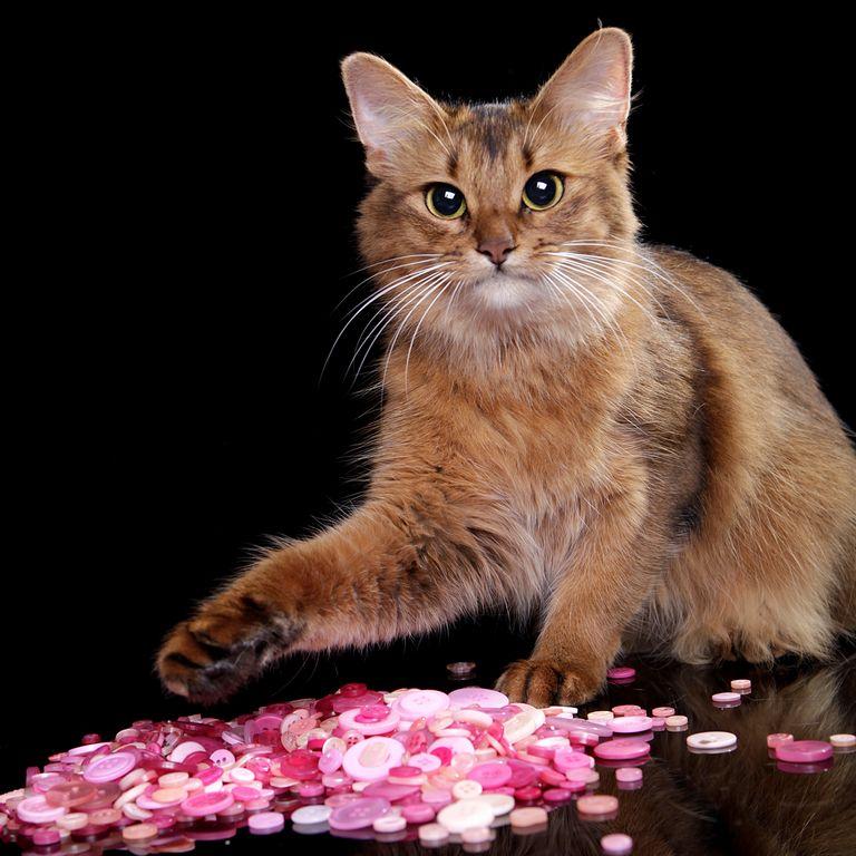 gta 5 cats