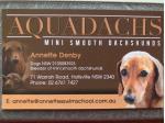 Aquadachs Dachshunds - Mini Smooth Dachshund Breeder - Tamworth, NSW