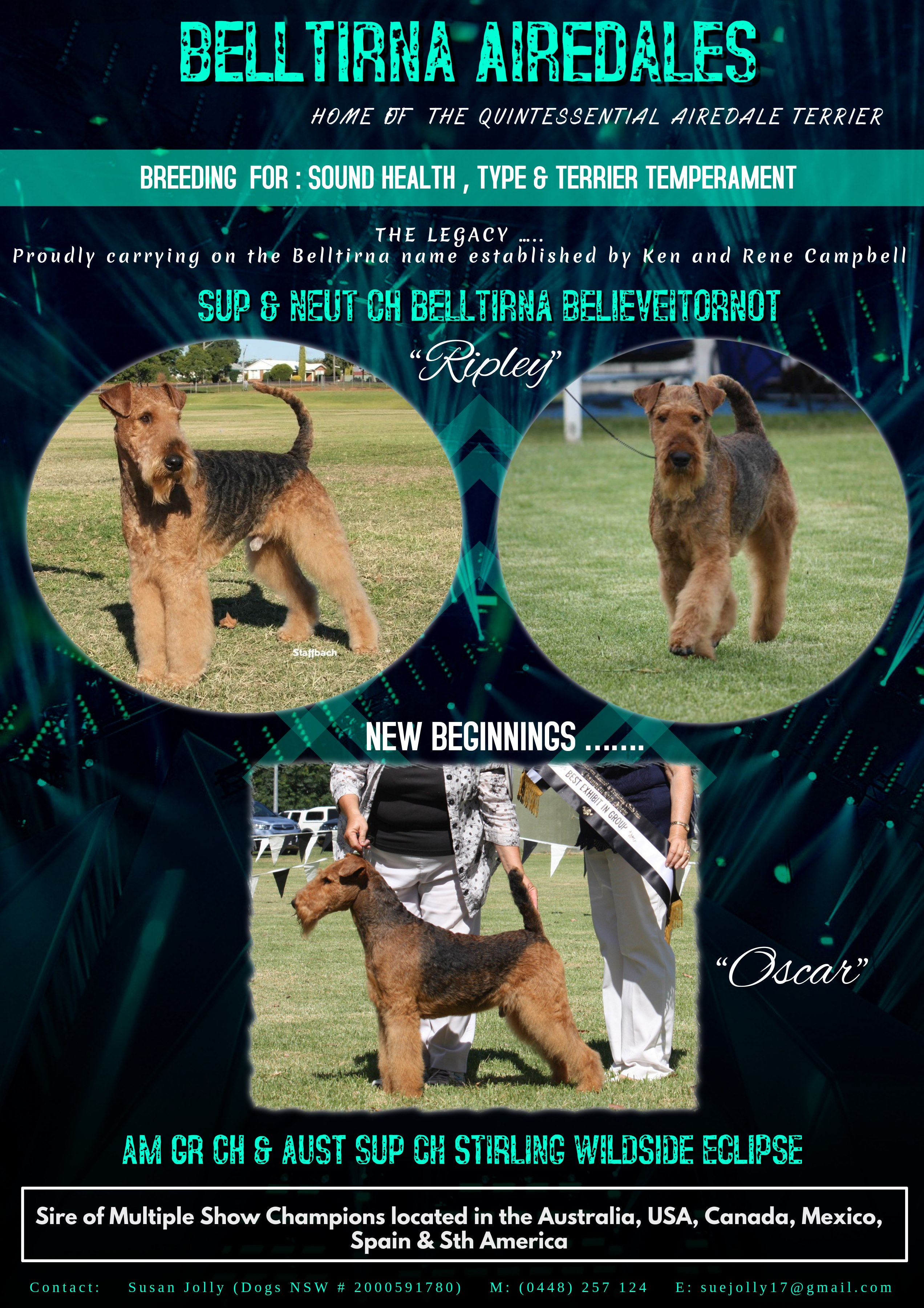 Belltirna Airedales gallery image