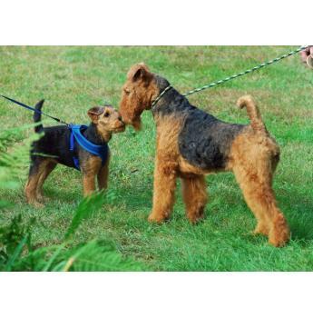 Registered Dog Breeders Australia