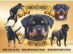 Fantastickrot Rottweilers - Rottweiler Breeder - Perth, WA