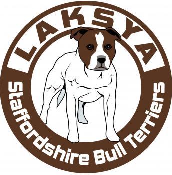 Registered Staffordshire Bull Terrier Dog Breeders Australia