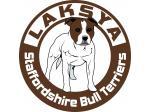 Laksya Staffordshire Bull Terriers - Port Pirie, SA