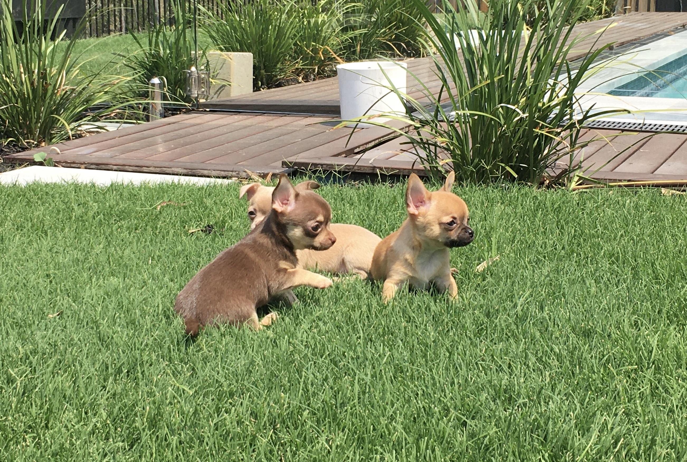 Jendrika puppies gallery image