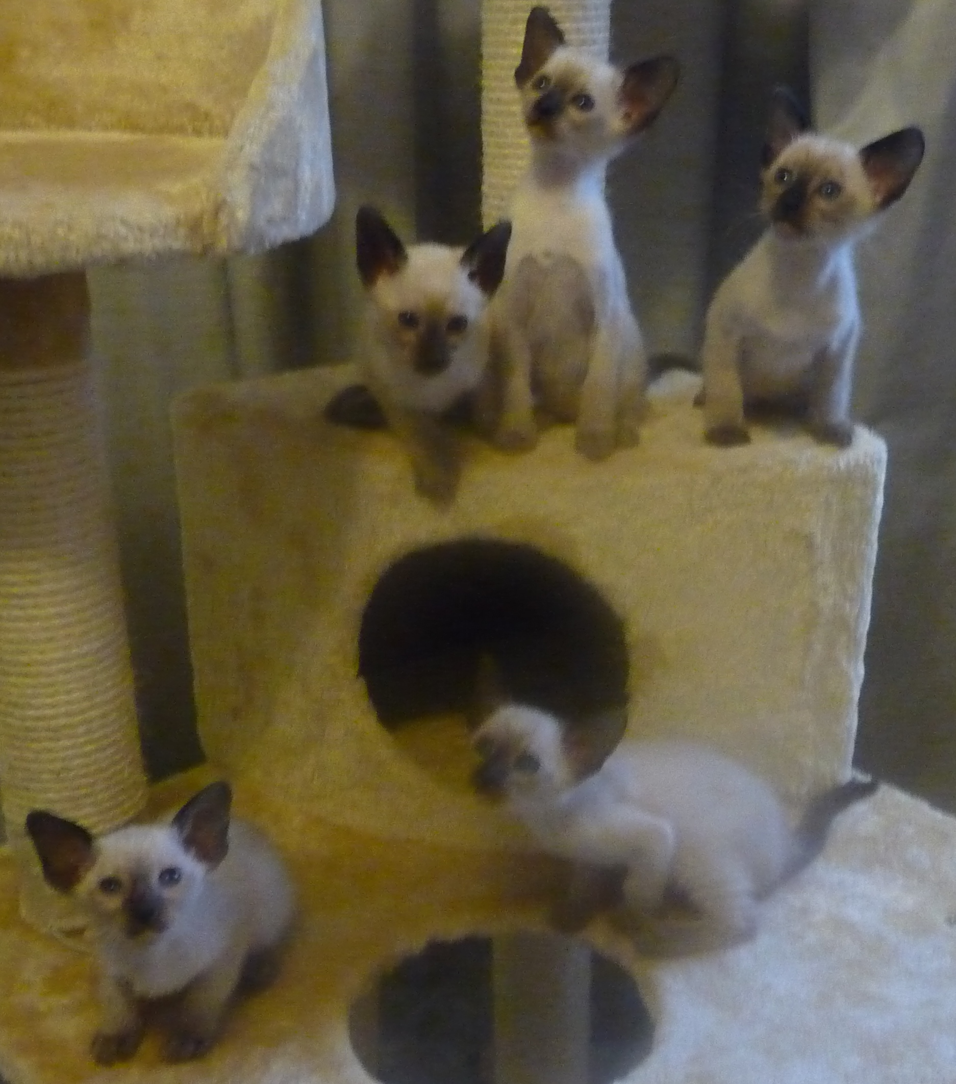 Shiloh Valentines litter gallery image