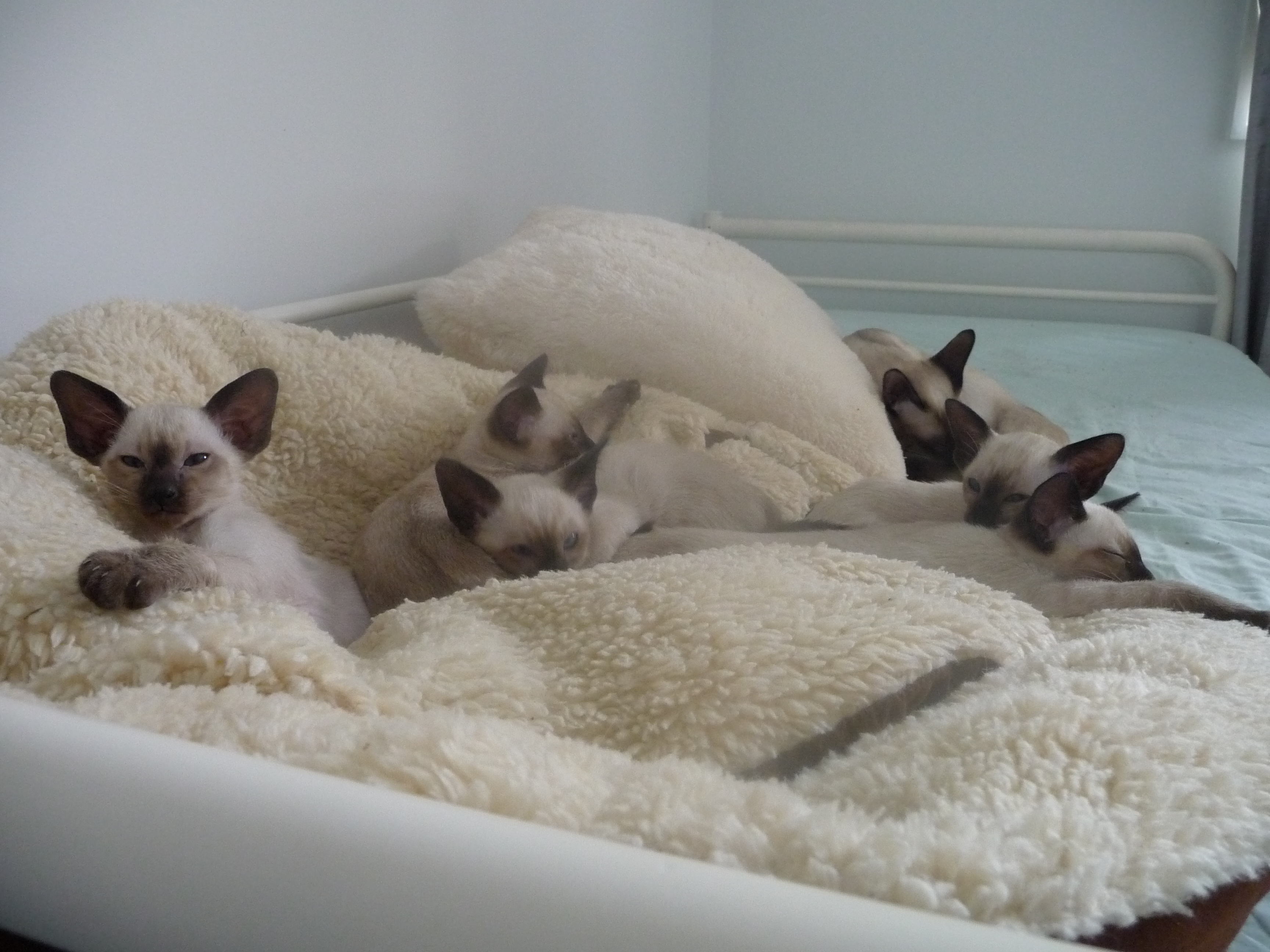 Shiloh litter gallery image