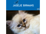 Jaselie Birmans - Birman Breeder - Sydney, NSW