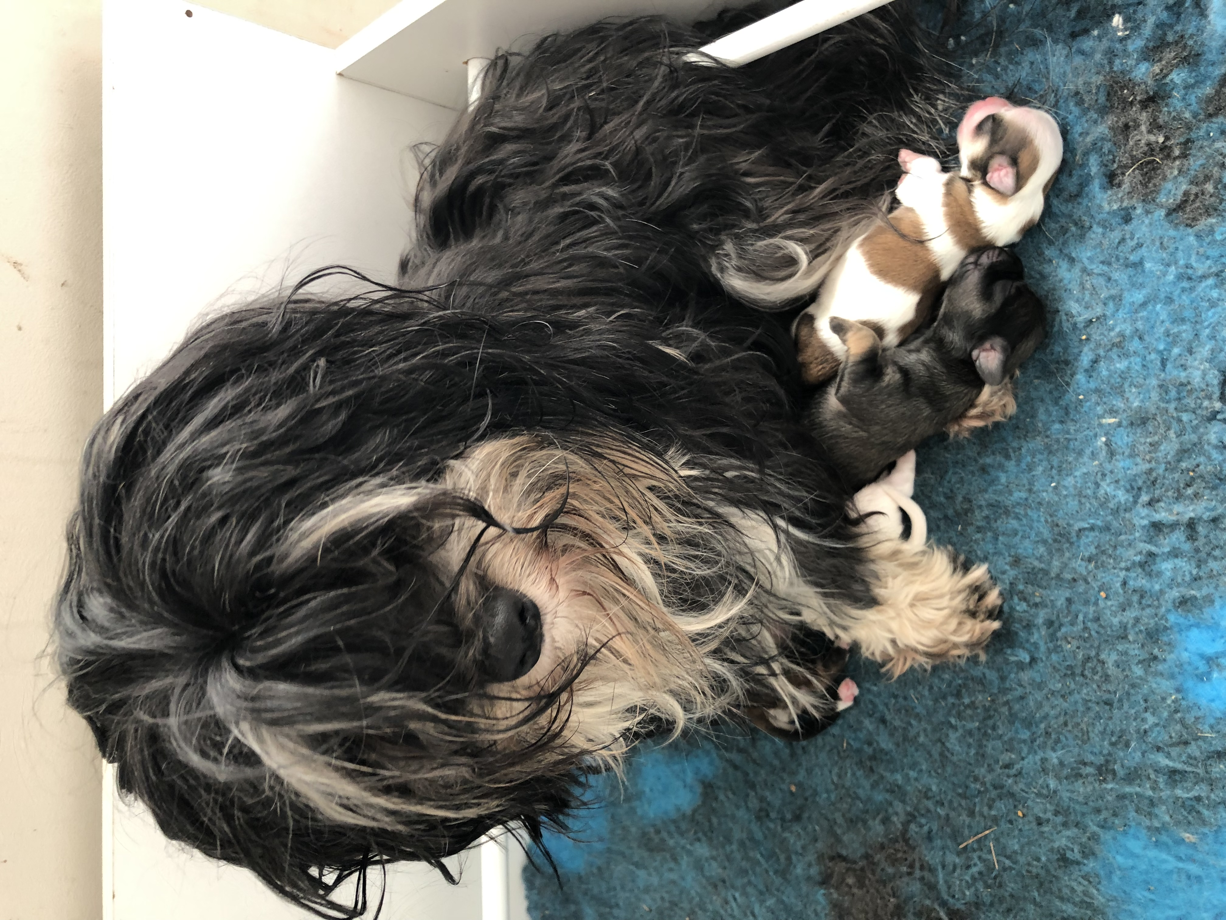 Gypsy and pups  gallery image