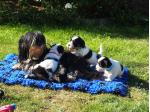 Ellingly Havanese - Havanese Breeder - Kingston, TAS
