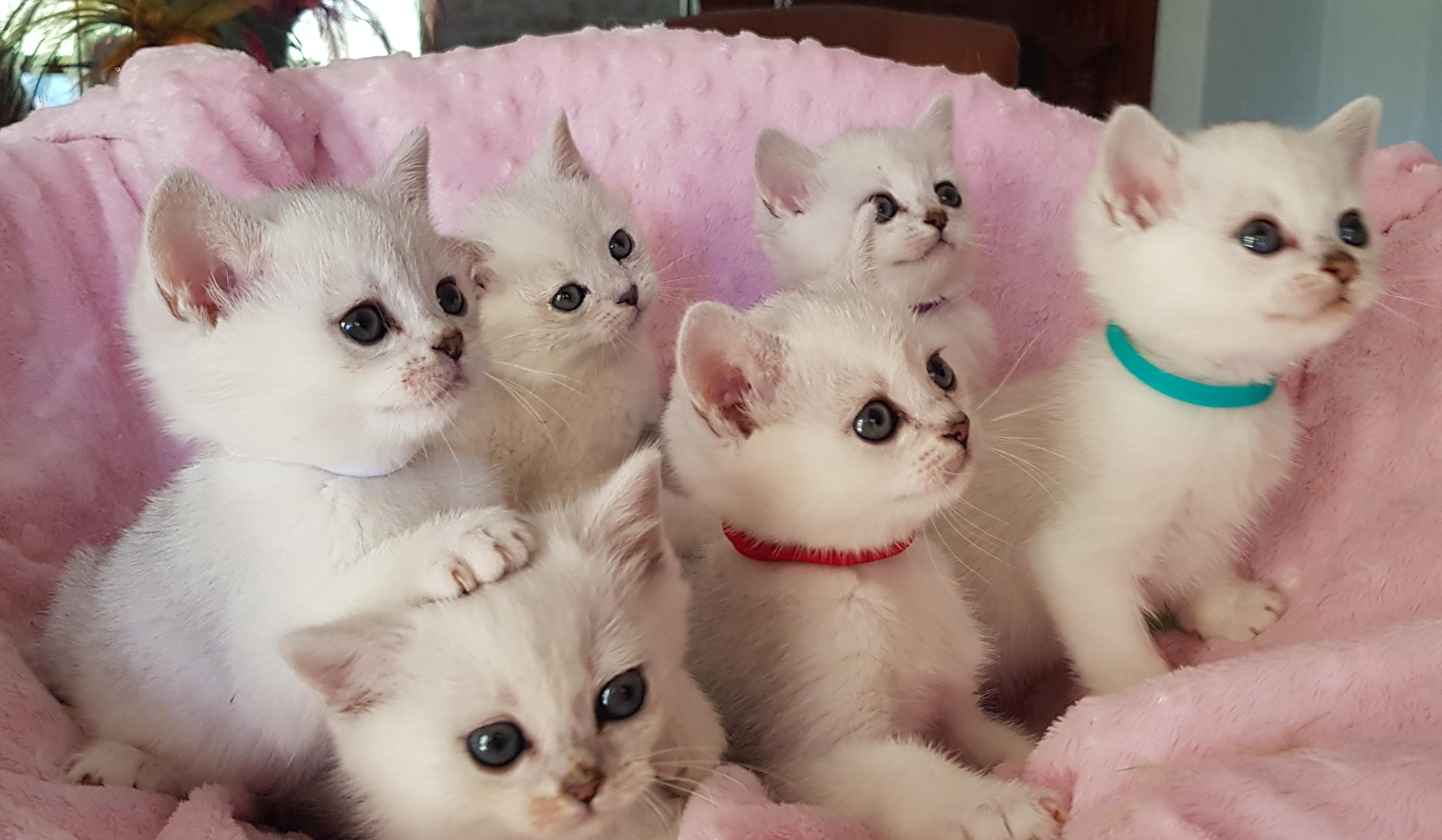 Miamber Kittens gallery image
