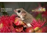 Wildcare Australia - Wildlife Care & Rescue - South-East Queensland