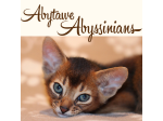 Abytawe Abyssinians -Abyssinian Cat Breeder - Central Coast, NSW