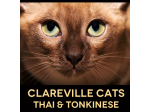 Clareville Cats - Thai & Tonkinese Breeder - Northern Beaches, Sydney